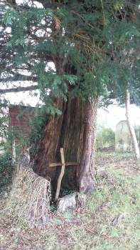 The tree by the lychgate at Minstead.